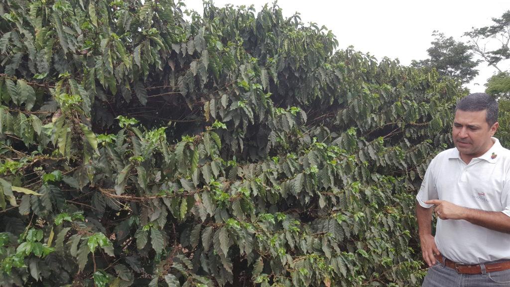 Fazenda Samambaia - Brazil