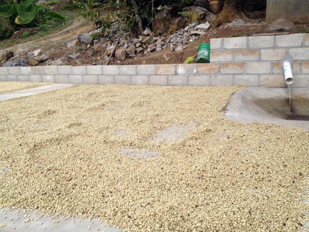Mexico Sierra Azul - Coffee Drying