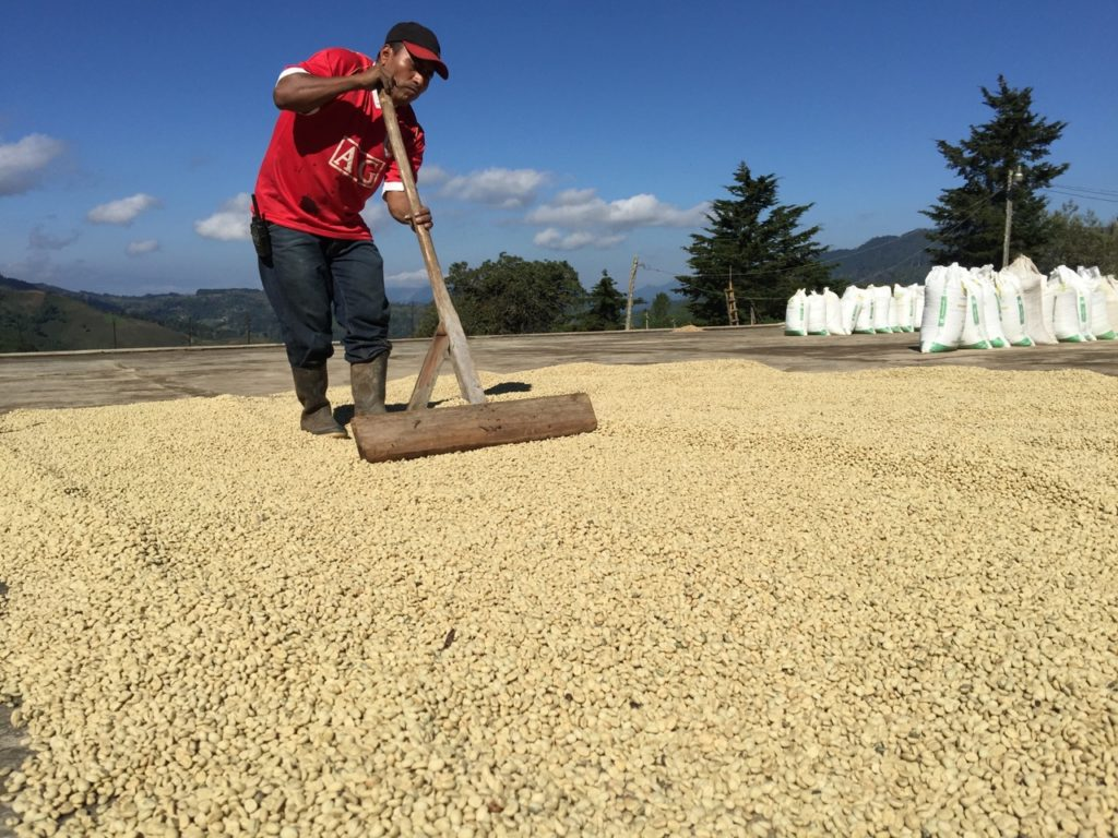 Guatemala Finca Santa Sofia - Natural coffee processing