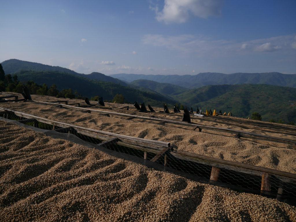 Rwanda Musasa Ruli coffee